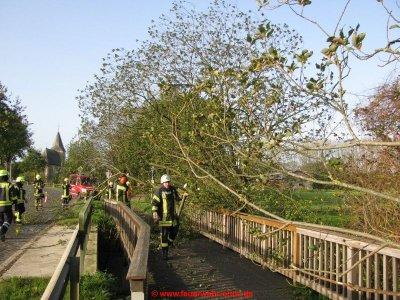 171029 H1 Umgestürzter Baum 1