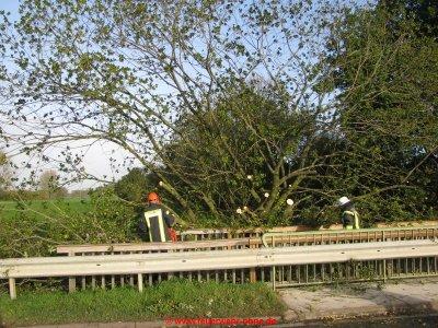 171029 H1 Umgestürzter Baum 2