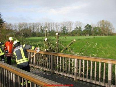 171029 H1 Umgestürzter Baum 3