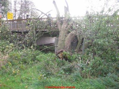 171029 H1 Umgestürzter Baum 4