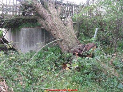 171029 H1 Umgestürzter Baum 5