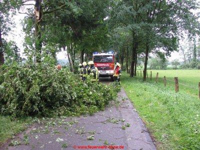 180529 H1 Umgestürzter Baum 2